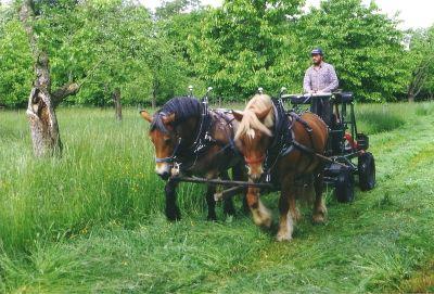 Pferde bei der Mahd