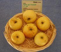 Apfel aus Croncels