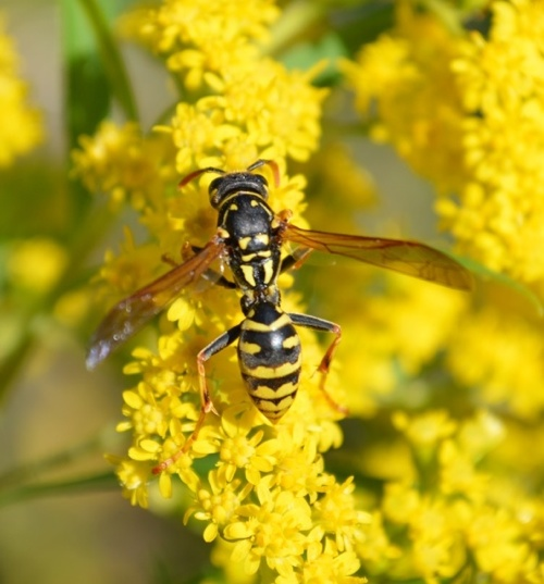 stehen bienen unter naturschutz